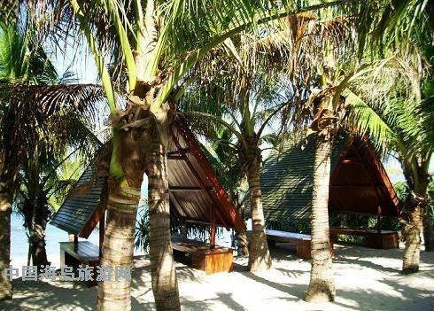 小岛不大,岛中央长满了椰子树.