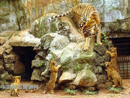 海南热带野生动植物园一改其它城市动物园高墙