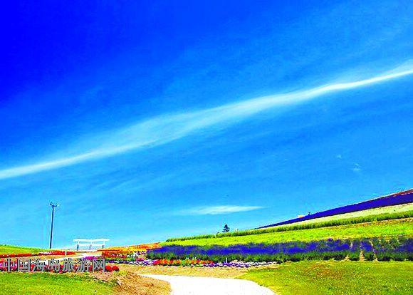 北海道,温泉,薰衣草,蓝天白云